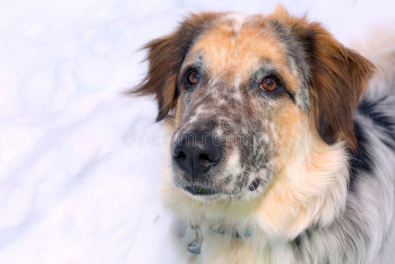 Φίμωτρο μεγάλου σκύλου στοκ φωτογραφίες