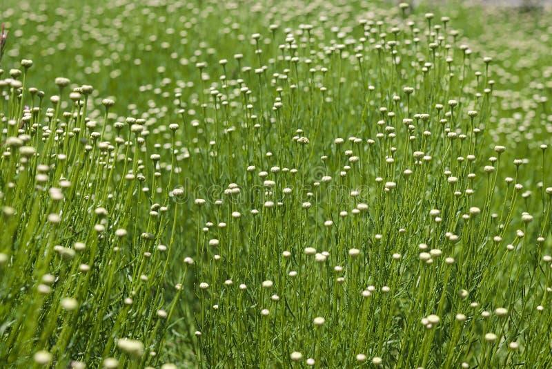 Φίνος τομέας Wildflower και χλόης στοκ φωτογραφία με δικαίωμα ελεύθερης χρήσης