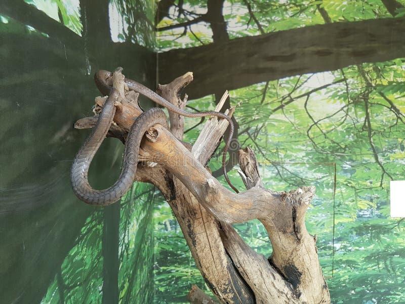 φίδια στοκ εικόνα με δικαίωμα ελεύθερης χρήσης