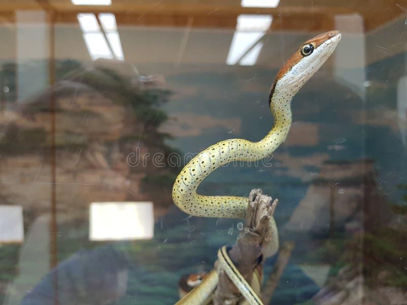 φίδια στοκ εικόνα