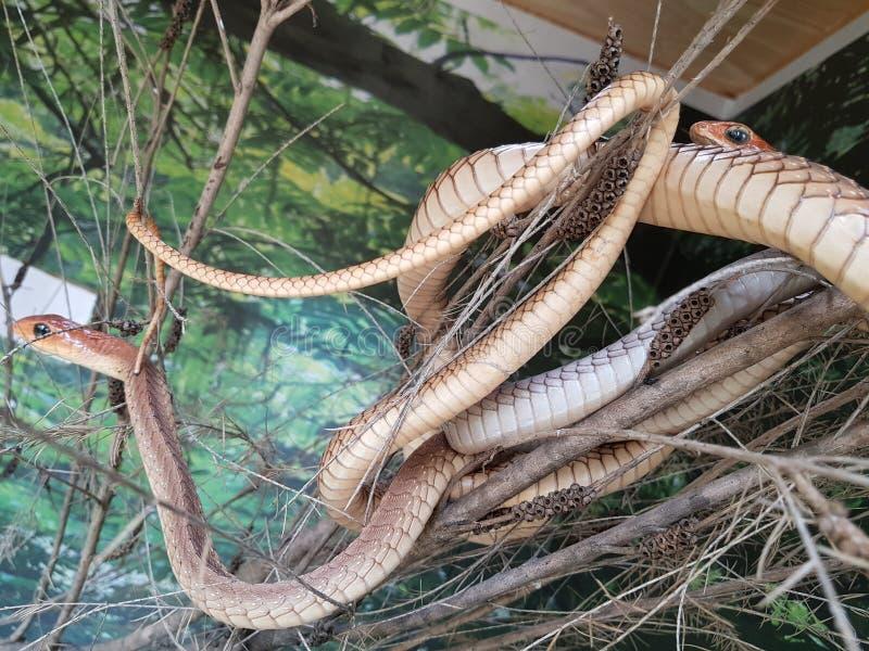 φίδια στοκ φωτογραφία