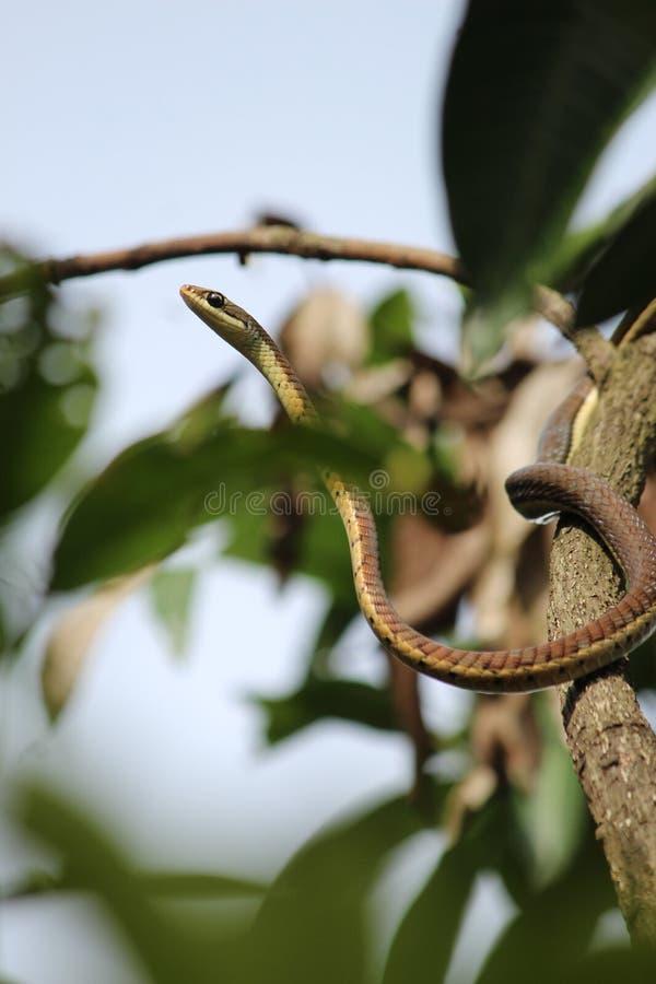 1 φίδι στοκ εικόνες
