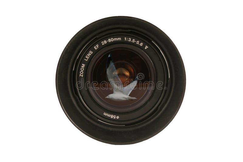 φακός καμερών Dslr 2880mm στοκ φωτογραφία με δικαίωμα ελεύθερης χρήσης