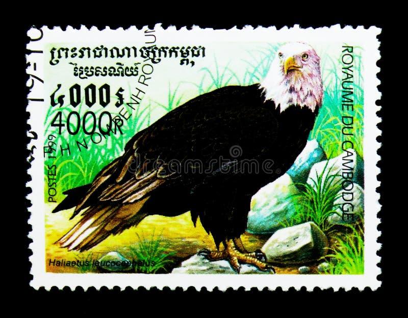Φαλακρό leucocephalus Haliaeetus αετών, πουλιά του θηράματος serie, circa 1999 στοκ εικόνα