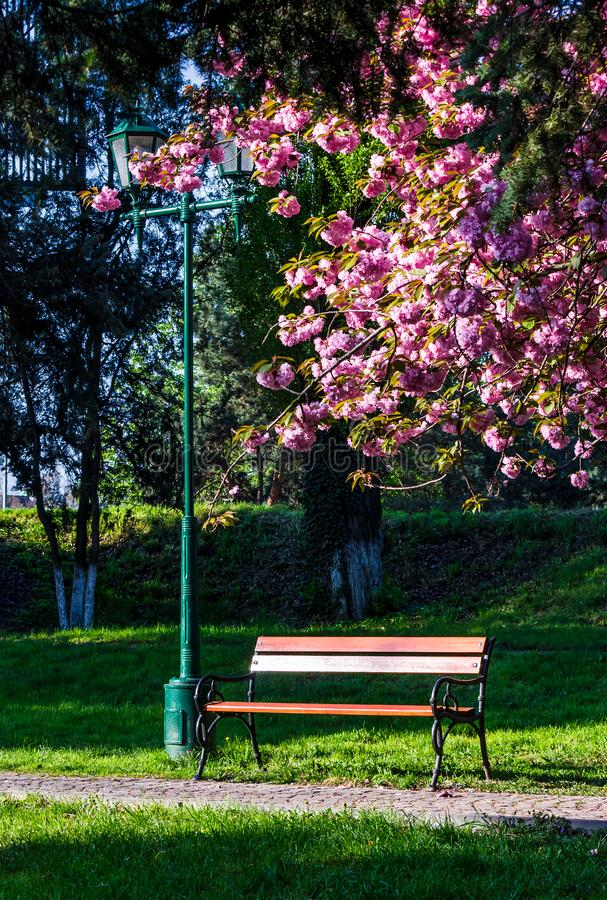 Φανάρι μέσα κάτω από τους κλάδους του δέντρου sakura στοκ φωτογραφία με δικαίωμα ελεύθερης χρήσης