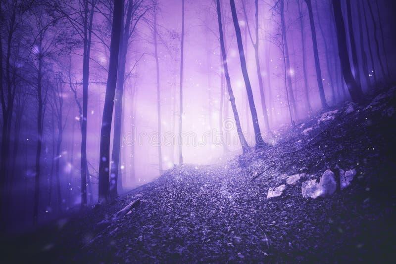 Φαντασία fireflies στο ομιχλώδες δάσος παραμυθιού στοκ εικόνα