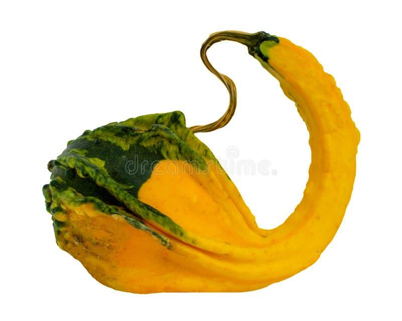 Φανταχτερή κίτρινη κολοκύθα που απομονώνεται στο άσπρο υπόβαθρο στοκ φωτογραφίες