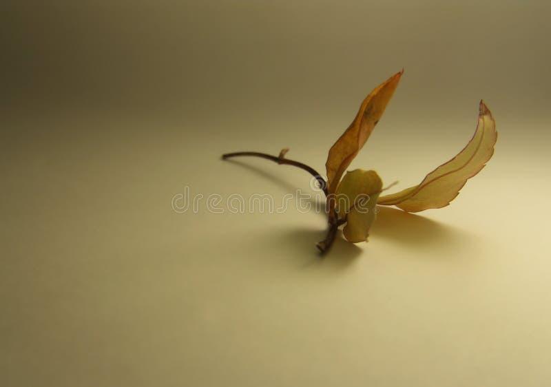 φανταχτερή πτήση στοκ φωτογραφία με δικαίωμα ελεύθερης χρήσης