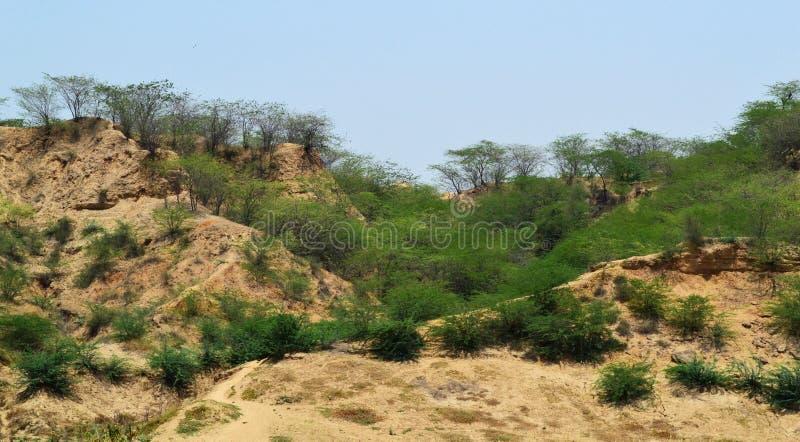 Φαράγγια chambal στοκ εικόνες με δικαίωμα ελεύθερης χρήσης