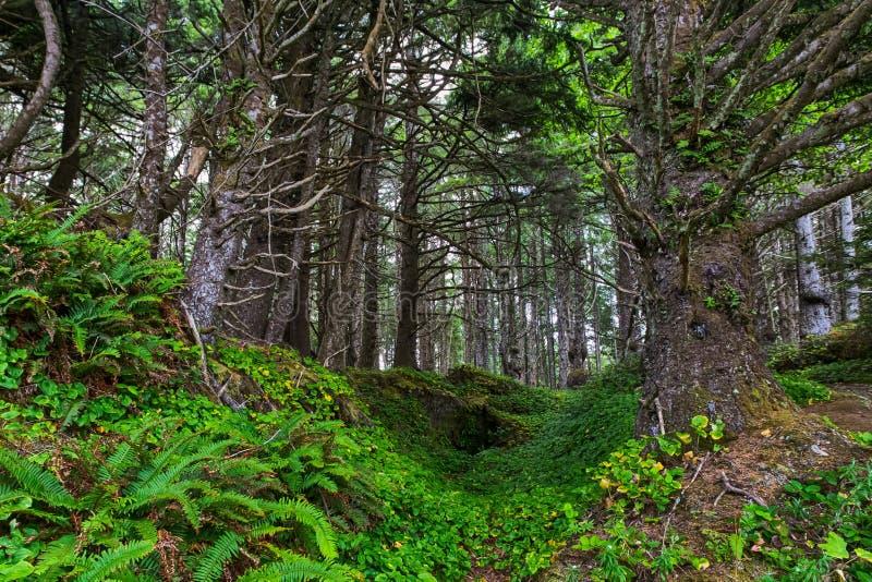 Φαράγγι στο δάσος στοκ φωτογραφία με δικαίωμα ελεύθερης χρήσης