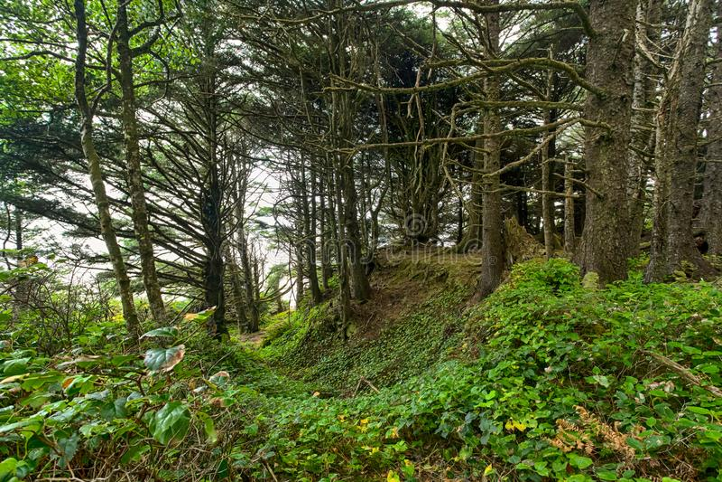 Φαράγγι στο δάσος στοκ εικόνες