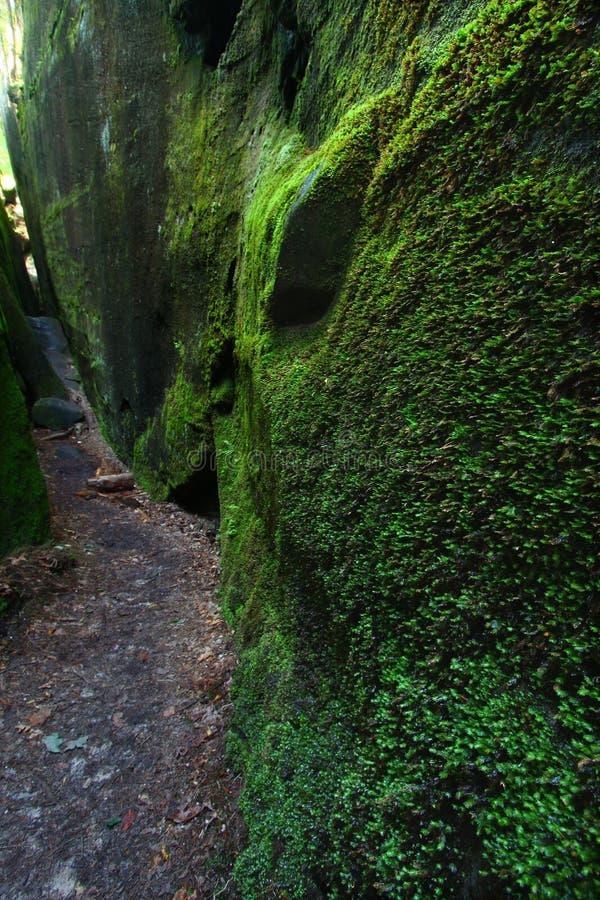 φαράγγι της Αλαμπάμα mossy στοκ φωτογραφίες με δικαίωμα ελεύθερης χρήσης