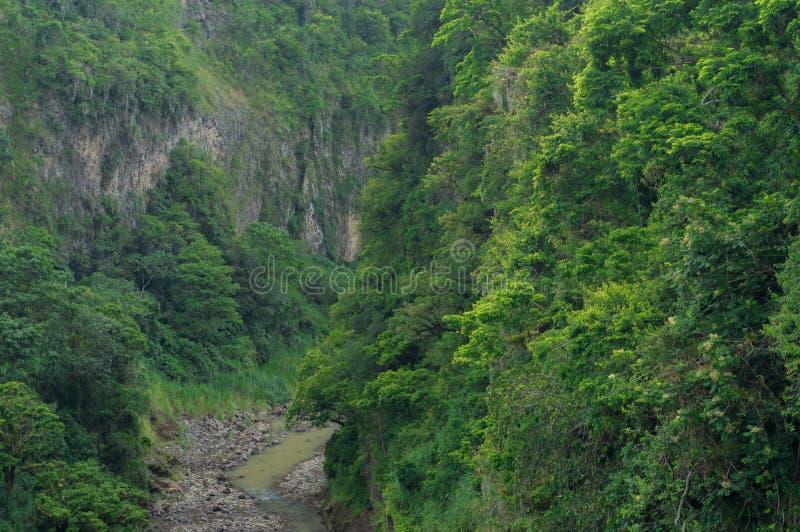 Φαράγγι του ποταμού στο τροπικό δάσος στοκ εικόνες