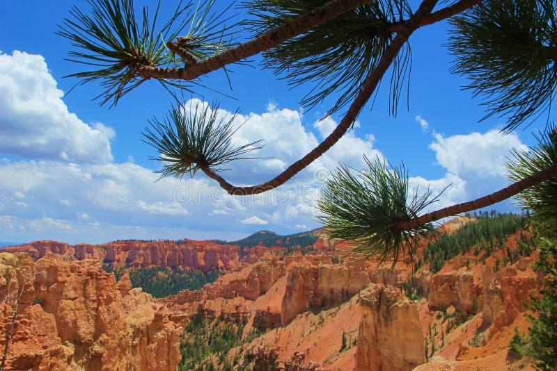 Φαράγγι του Bryce μέσω των δέντρων στοκ φωτογραφία με δικαίωμα ελεύθερης χρήσης