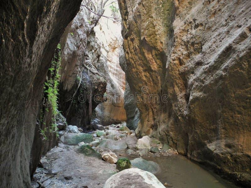 Φαράγγι Avakas στη Κύπρο Λίγος ποταμός και οι ηλιοφώτιστοι βράχοι είναι στο υπόβαθρο στοκ φωτογραφίες με δικαίωμα ελεύθερης χρήσης