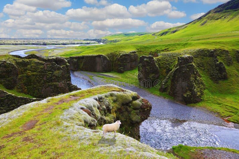Φαράγγι Fjadrargljufur Dreamland στοκ φωτογραφίες με δικαίωμα ελεύθερης χρήσης