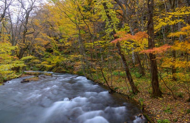 Φαράγγι Oirase το φθινόπωρο, σε Aomori, Ιαπωνία στοκ φωτογραφίες