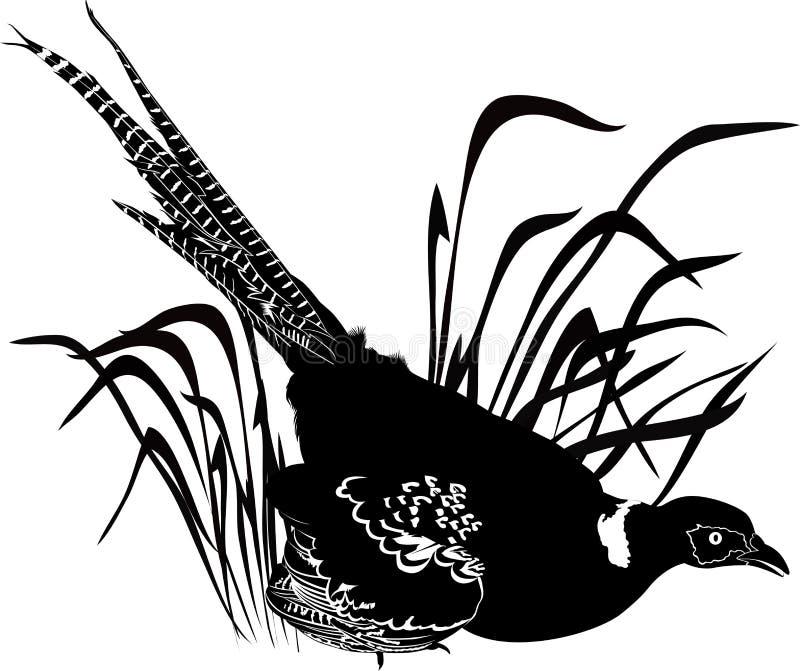 Φασιανός πουλιών ελεύθερη απεικόνιση δικαιώματος