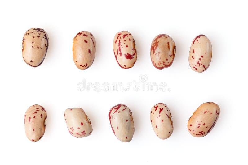 Φασόλια νεφρών που απομονώνονται στο άσπρο υπόβαθρο E στοκ εικόνα με δικαίωμα ελεύθερης χρήσης