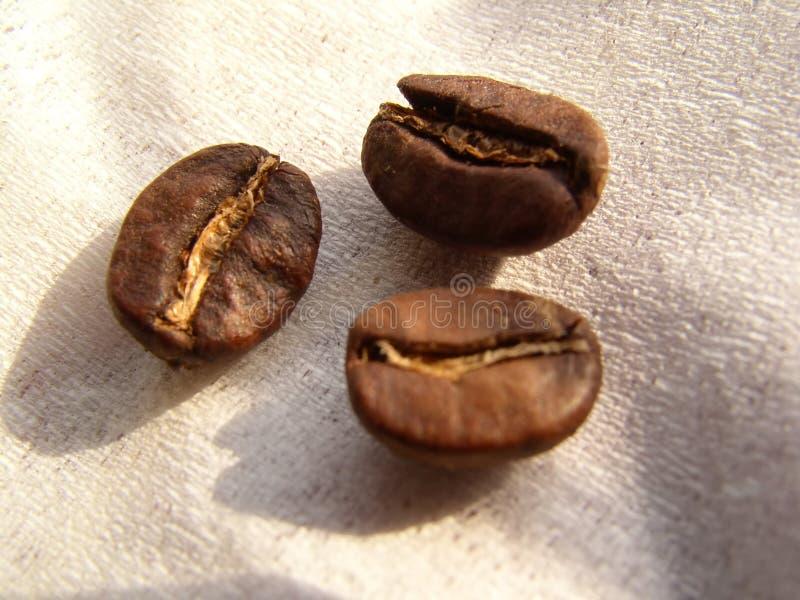 Download φασόλια coffe στοκ εικόνα. εικόνα από καυτός, closeup, έδαφος - 113293