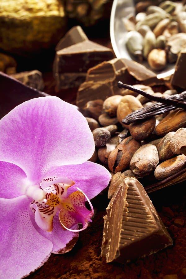 Φασόλια κακάου, φρούτα κακάου, σοκολάτα, άνθος orchidee στοκ φωτογραφίες