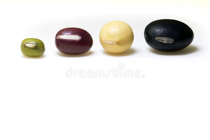 Φασόλια, κόκκινο φασόλι, μαύρο φασόλι, φασόλι σόγιας, mung φασόλι που απομονώνεται στο άσπρο υπόβαθρο στοκ εικόνα με δικαίωμα ελεύθερης χρήσης