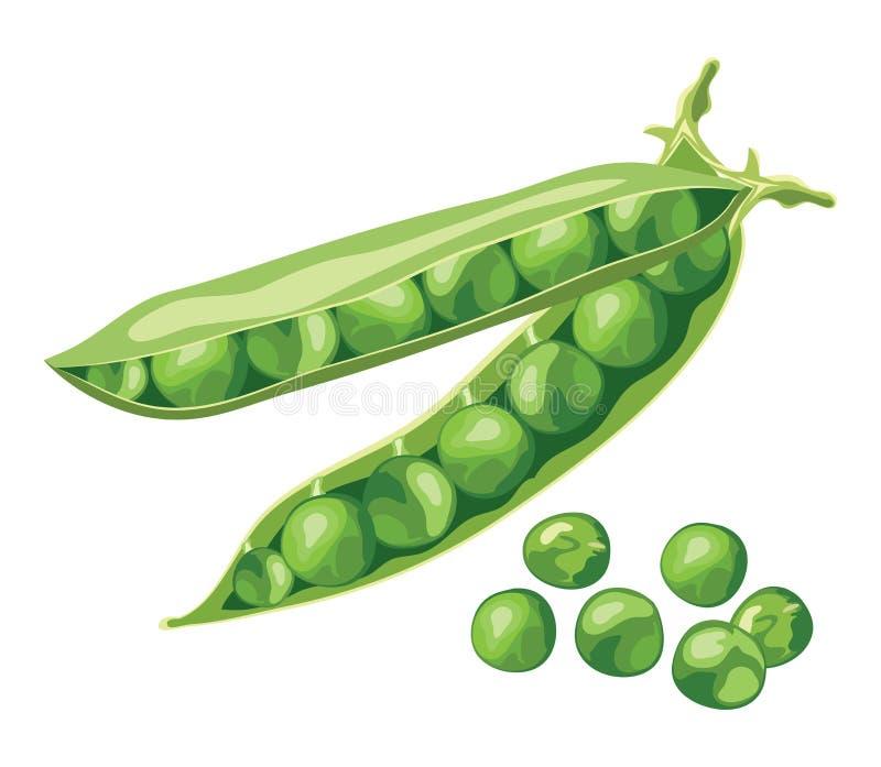 Φασόλια πράσινων μπιζελιών διανυσματική απεικόνιση