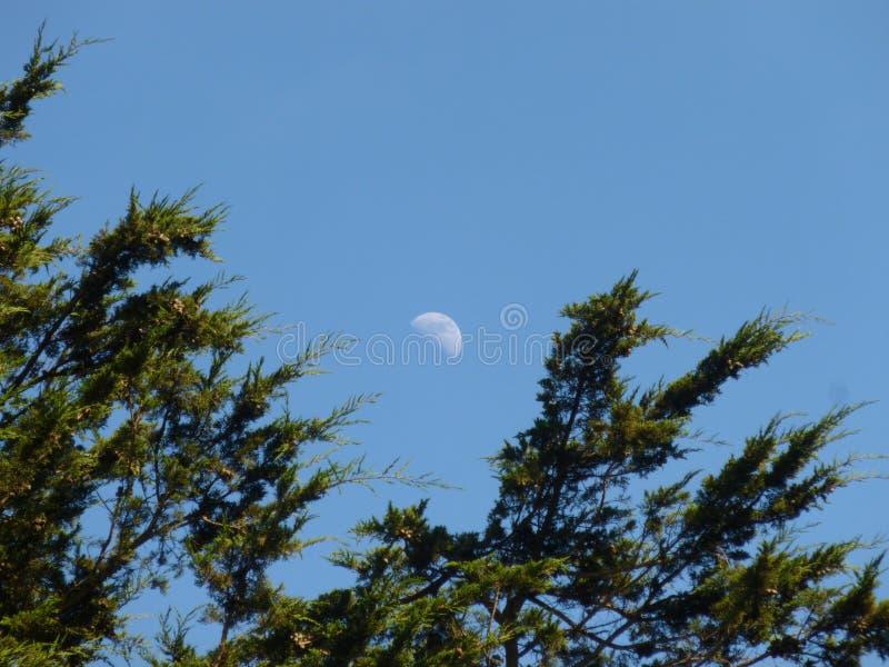 Φεγγάρι και δέντρα στοκ φωτογραφίες με δικαίωμα ελεύθερης χρήσης