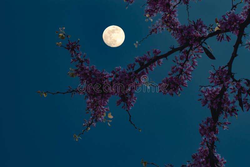 φεγγάρι λουλουδιών κάτω στοκ εικόνες με δικαίωμα ελεύθερης χρήσης