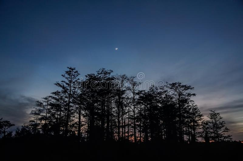Φεγγάρι πέρα από το έλος κυπαρισσιών στοκ φωτογραφίες με δικαίωμα ελεύθερης χρήσης