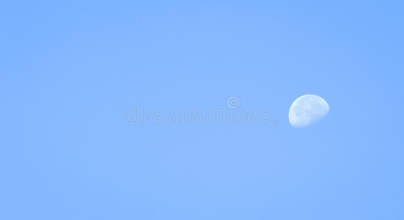 Φεγγάρι πρωινού στοκ εικόνες