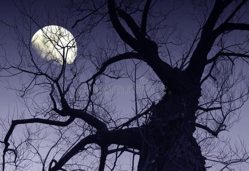φεγγάρι στοκ φωτογραφία
