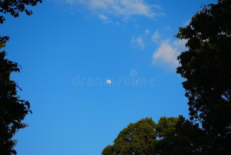 Φεγγάρι στοκ φωτογραφία με δικαίωμα ελεύθερης χρήσης