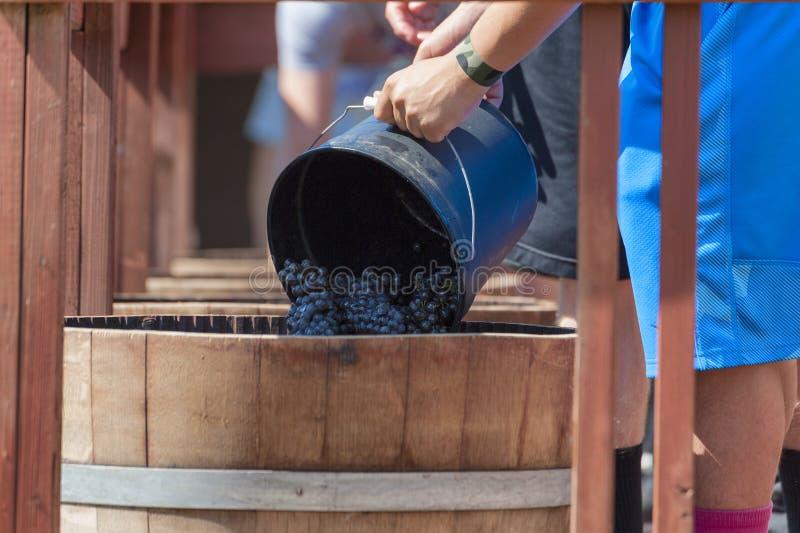Φεστιβάλ συγκομιδών συντριβής κρασιού στο Carlton Όρεγκον στοκ φωτογραφία με δικαίωμα ελεύθερης χρήσης