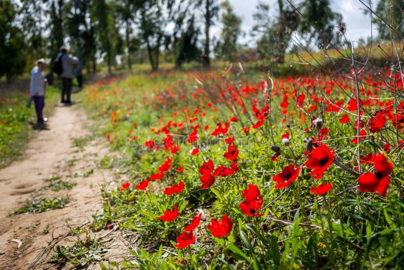 Φεστιβάλ Adom Darom στοκ φωτογραφία με δικαίωμα ελεύθερης χρήσης