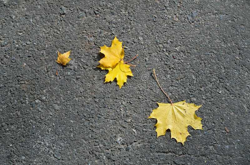 Φθινοπωρινά υπόβαθρα στοκ φωτογραφία με δικαίωμα ελεύθερης χρήσης