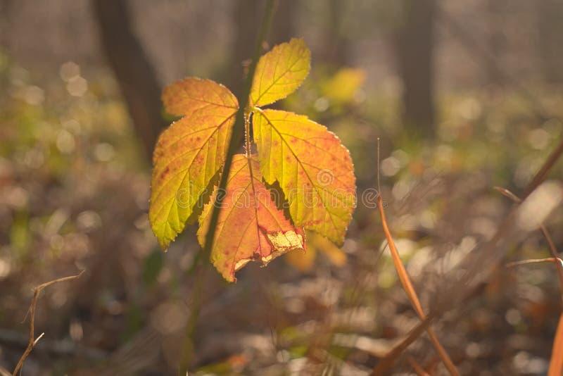 Φθινοπωρινά φύλλα στο δάσος στοκ φωτογραφία με δικαίωμα ελεύθερης χρήσης