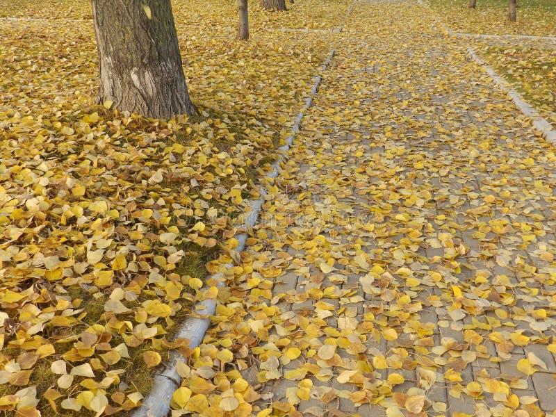 Φθινοπωρινά φύλλα λευκών στοκ φωτογραφίες με δικαίωμα ελεύθερης χρήσης