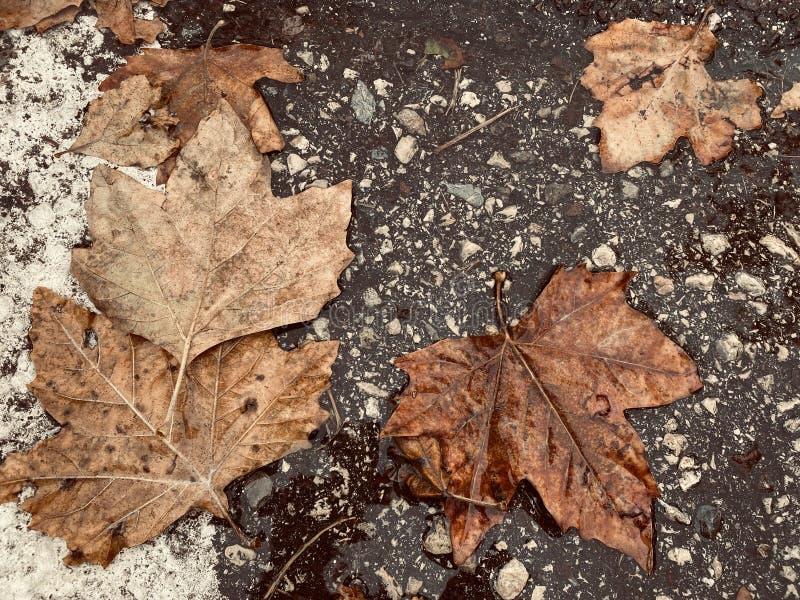 Φθινοπωρινά χρώματα Νοεμβρίου στοκ εικόνα