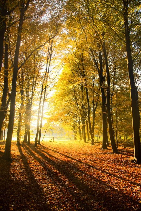 φθινοπωρινά όνειρα στοκ εικόνα με δικαίωμα ελεύθερης χρήσης