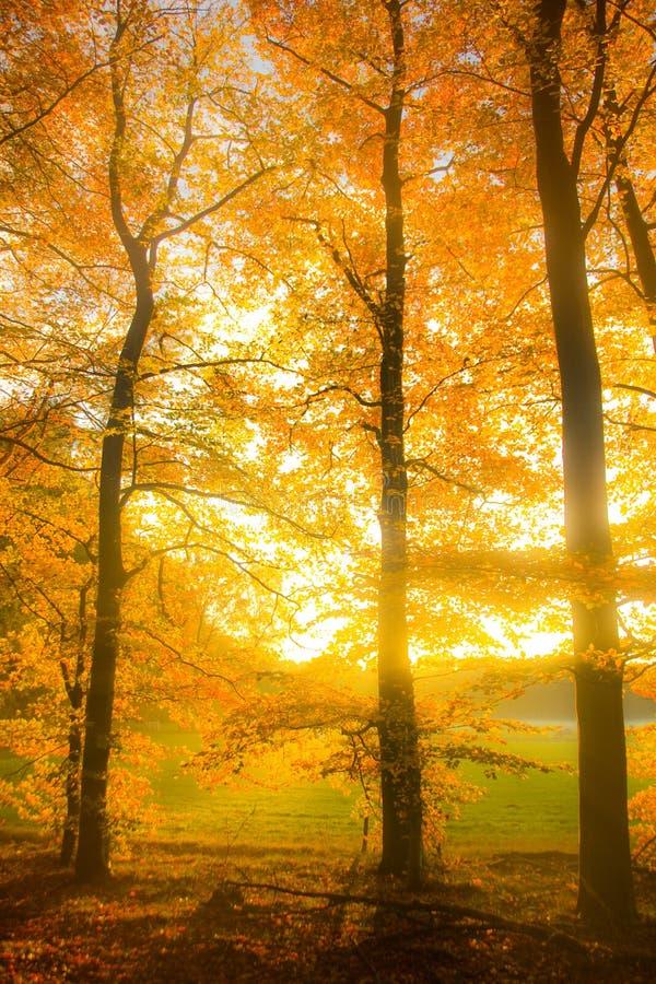 φθινοπωρινά όνειρα στοκ εικόνα