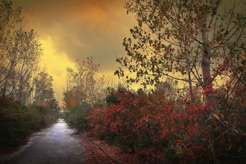 Φθινοπωρινή διαδρομή χρυσής πτώσης και λυκόφως στοκ εικόνες