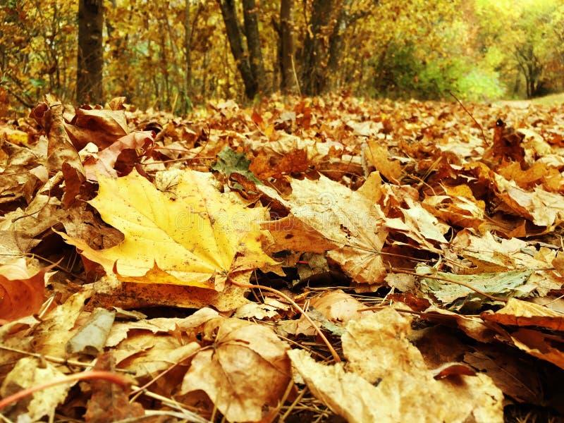 φθινοπωρινή μελαγχολία φύλλων ημέρας κίτρινη στοκ εικόνα με δικαίωμα ελεύθερης χρήσης