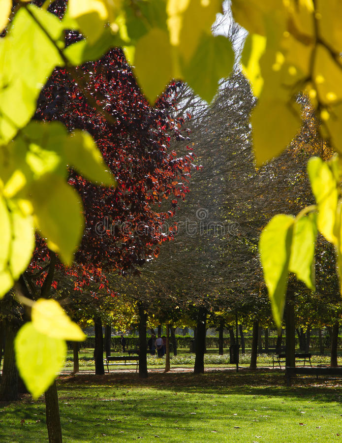 φθινοπωρινή σκηνή πάρκων στοκ φωτογραφίες