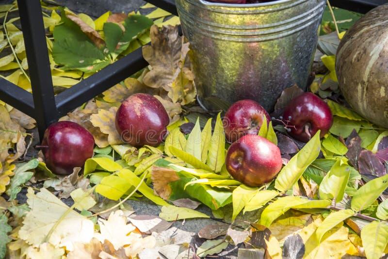 Φθινοπωρινή Συγκομιδή Μήλα και φύλλα στοκ εικόνες