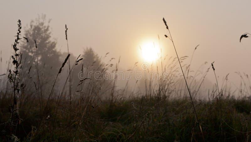 Φθινοπωρινή χλόη το misty πρωί με τη σφαίρα ήλιων στοκ φωτογραφίες