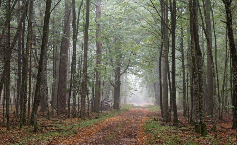 φθινοπωρινός επίγειος misty &de στοκ φωτογραφία με δικαίωμα ελεύθερης χρήσης