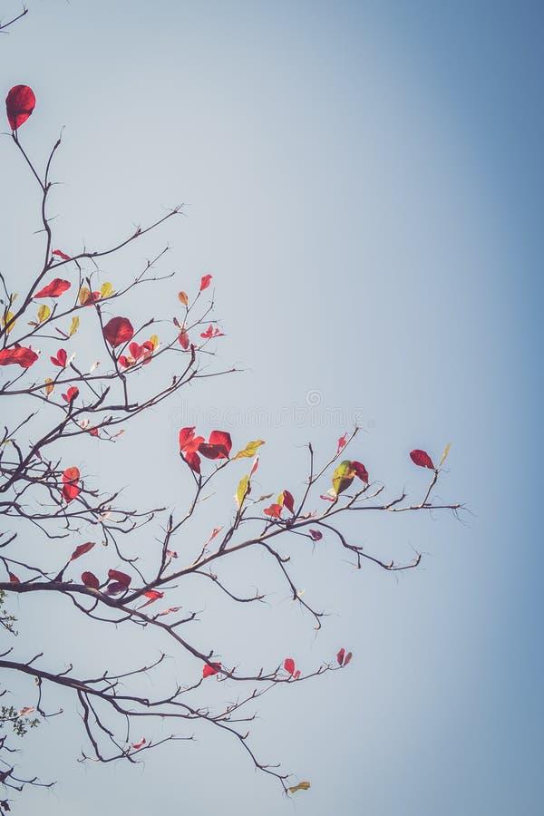 Φθινοπωρινός κλάδος, εκλεκτής ποιότητας φίλτρο στοκ εικόνες