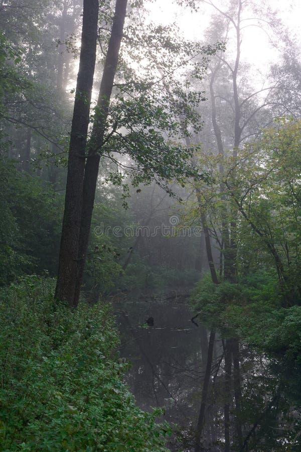 φθινοπωρινός πρώιμος δασικός misty ποταμός πρωινού στοκ φωτογραφίες
