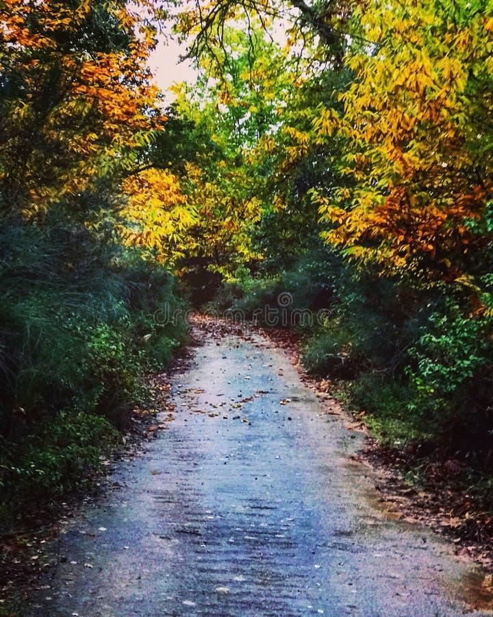 φθινοπωρινός δρόμος στοκ φωτογραφίες